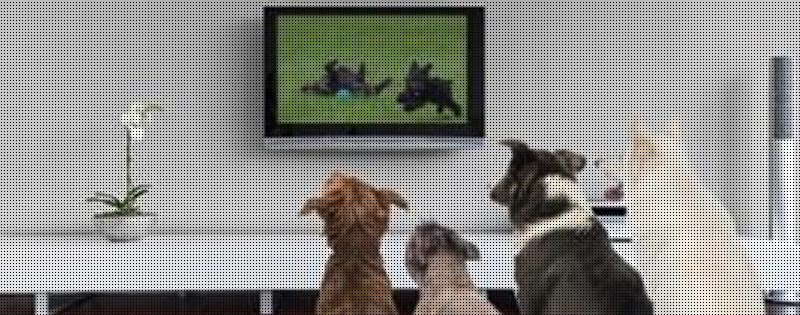 DOGTV: Is It Worth The $5 A Month?